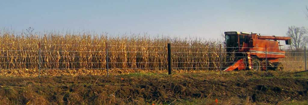 Iowa corn fields can be found throughout the state.