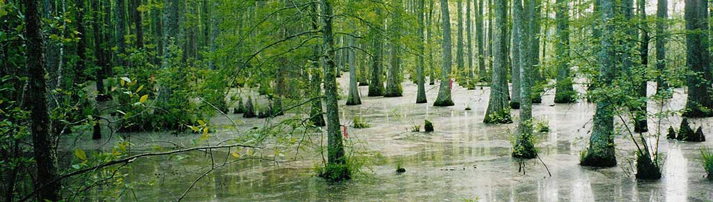 The Wolf River Swamp in northern Mississippi is a favorite tourist site for those visiting Mississippi.